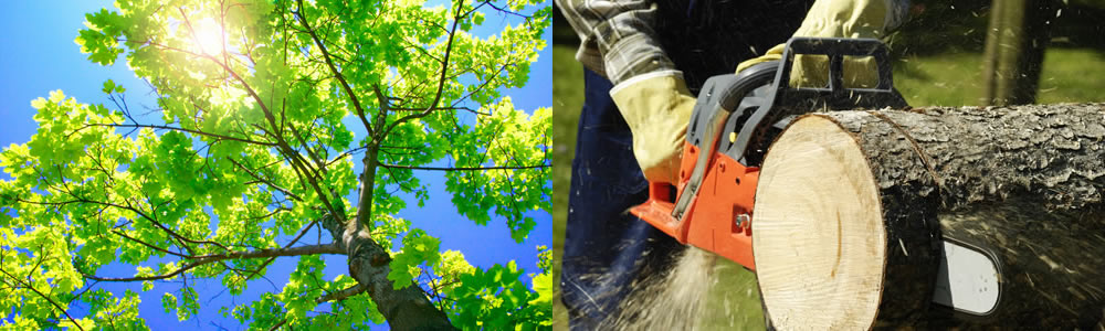 Tree Services Glendale